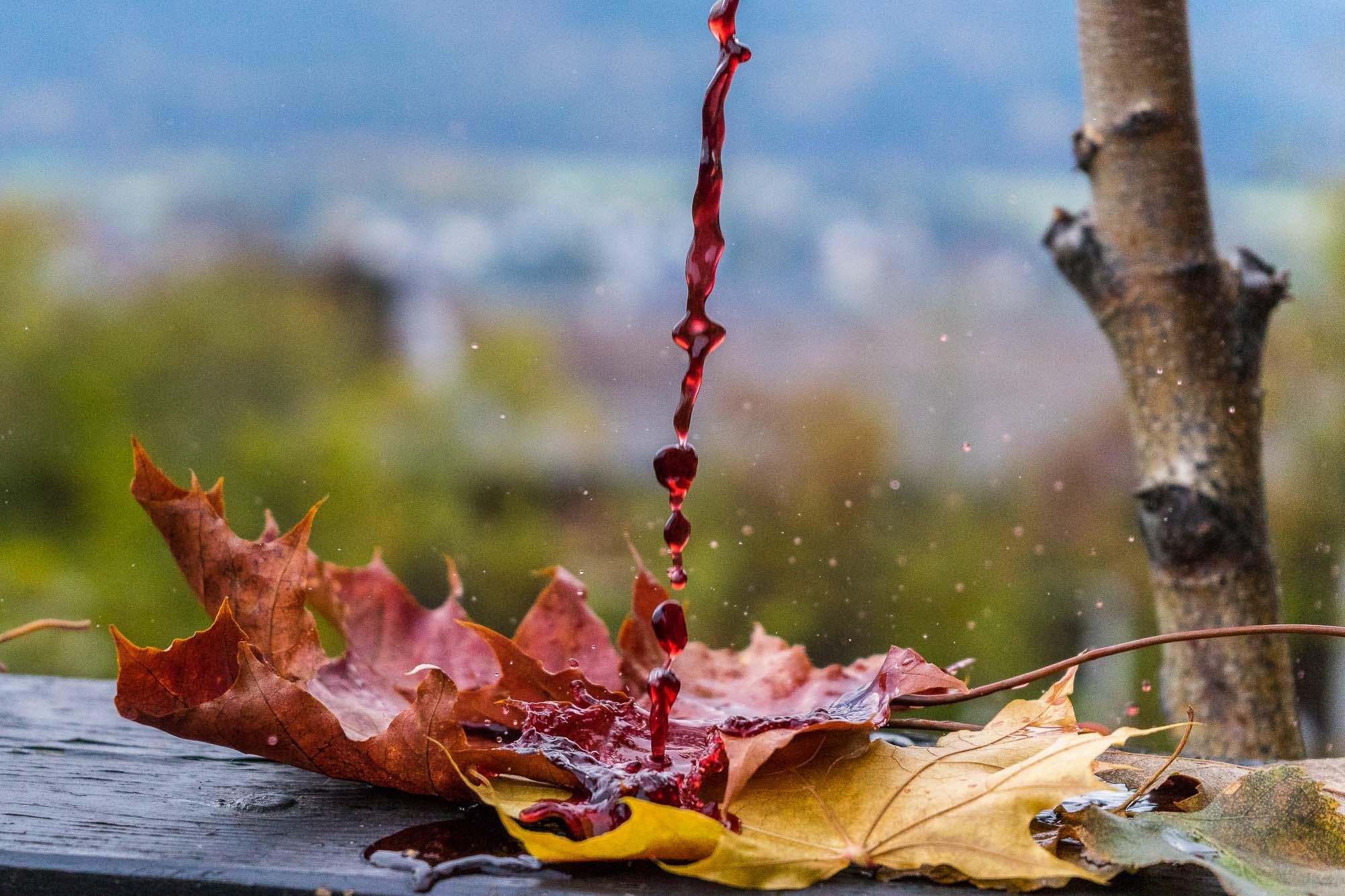 NY TID I EMNING Straks sommeren er endt, blir løvet tent (Nils Collett Vogt) Bildet er tatt med Sony A7 ISO 1600, f/5,6 og lukkertid 1/2500. Mitt ønske var å få frem fargen av rennende rødvin ned på røde og gule almeblader med en liten synlig sprut. Fargen i bakgrunnen er grønn som gir et tegn på skifte av årstid.