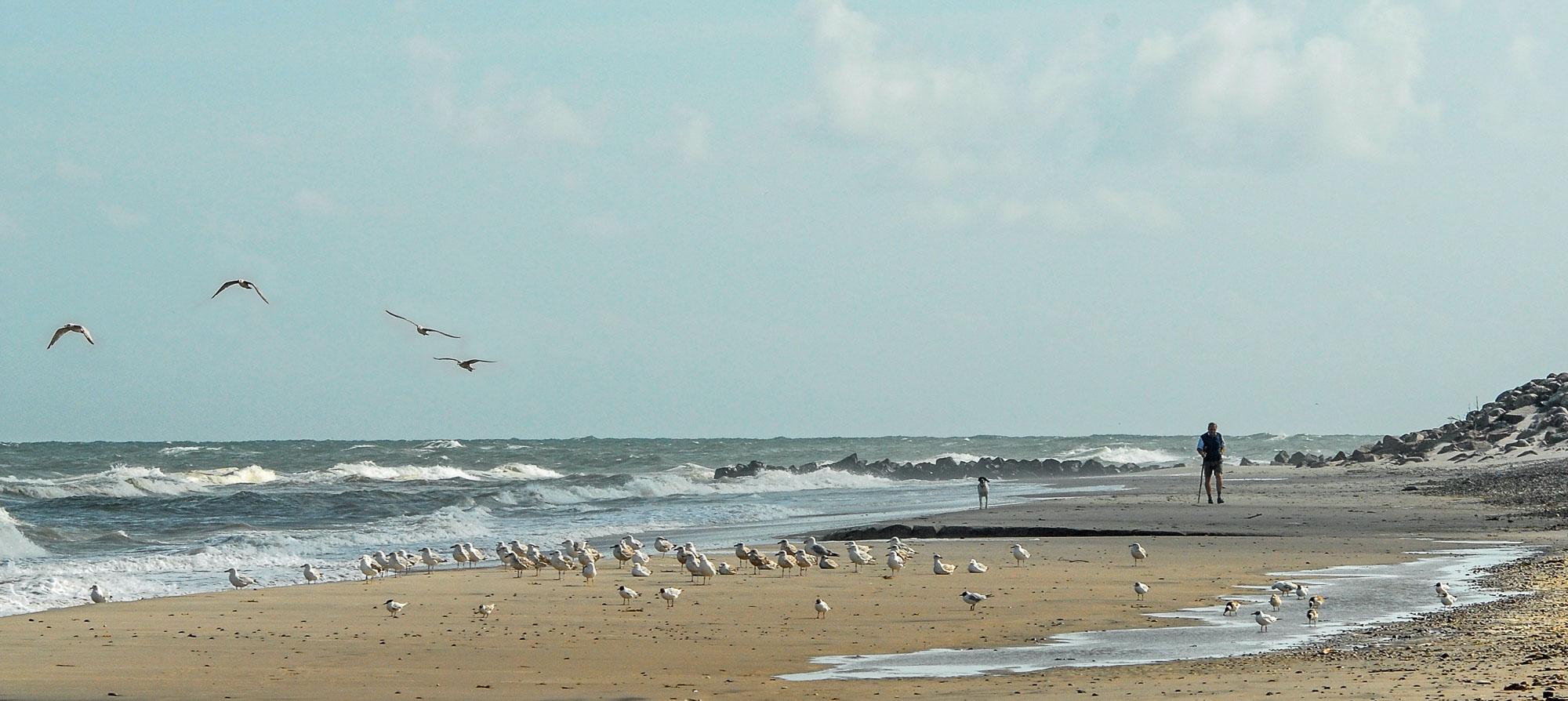 Bildet er fra Skagen i Danmark. For en som er oppvokst i innlandet er havet fascinerende, spesielt med det fine lyset som er i Skagen. Denne morgenen var intet unntak. På en morgentur møtte jeg denne mannen som var ute og luftet hunden. Havet, stranden og fuglene sammen med mannen og hunden ble et fint motiv. Jeg tok mange bilder, flest der fuglene satt rolig, men likte best dette der fuglene er i lufta.