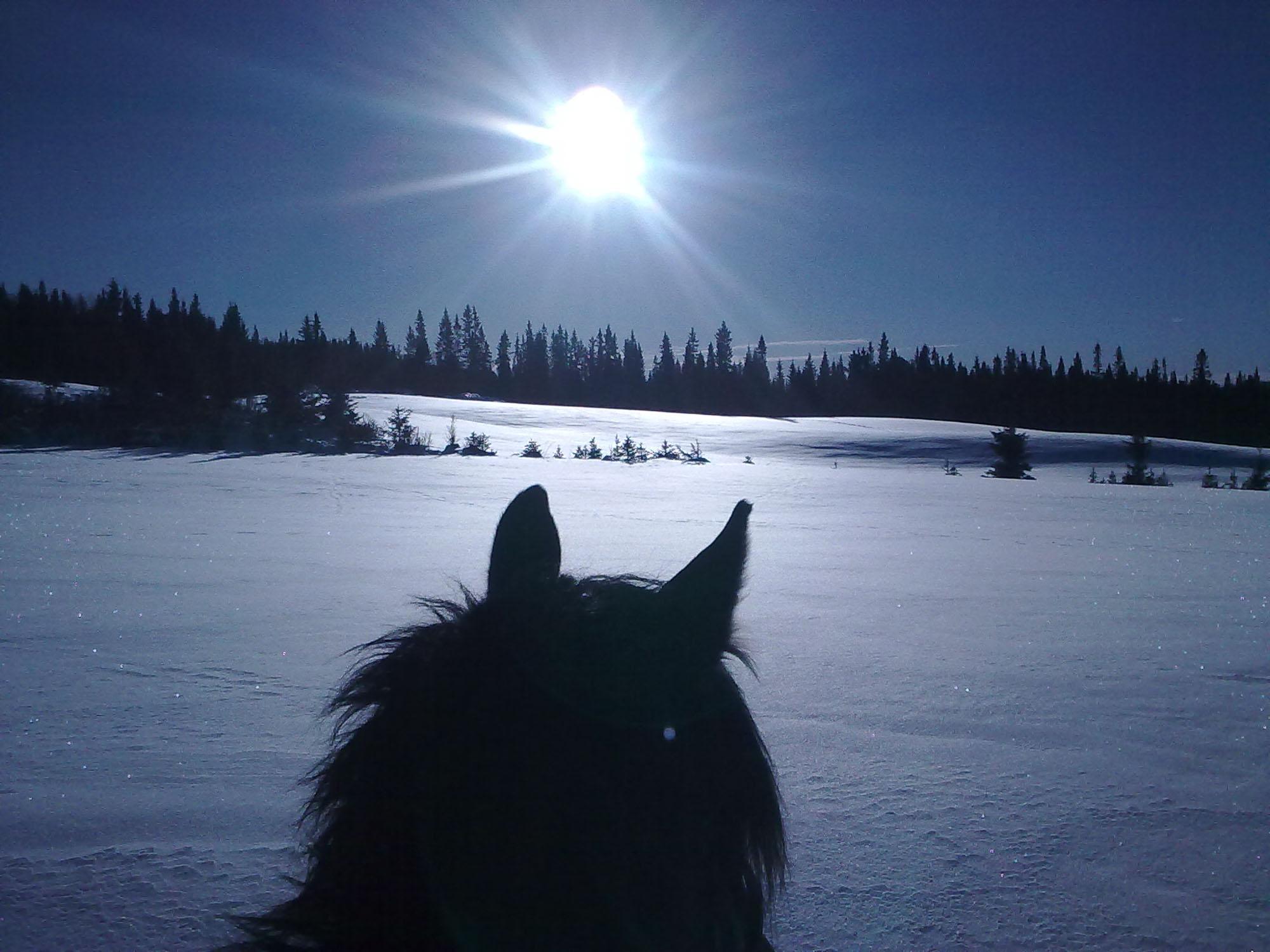På ridetur innover Svartmorka, som er på fjellet mellom Ringebu og Fåvang på min kjære Rocky Ray, min beste venn som måtte få slippe nå i høst. Men for en fantastisk frihet å kunne sette seg på disse staselige og mektige dyrene å ri innover snødekte vidder.