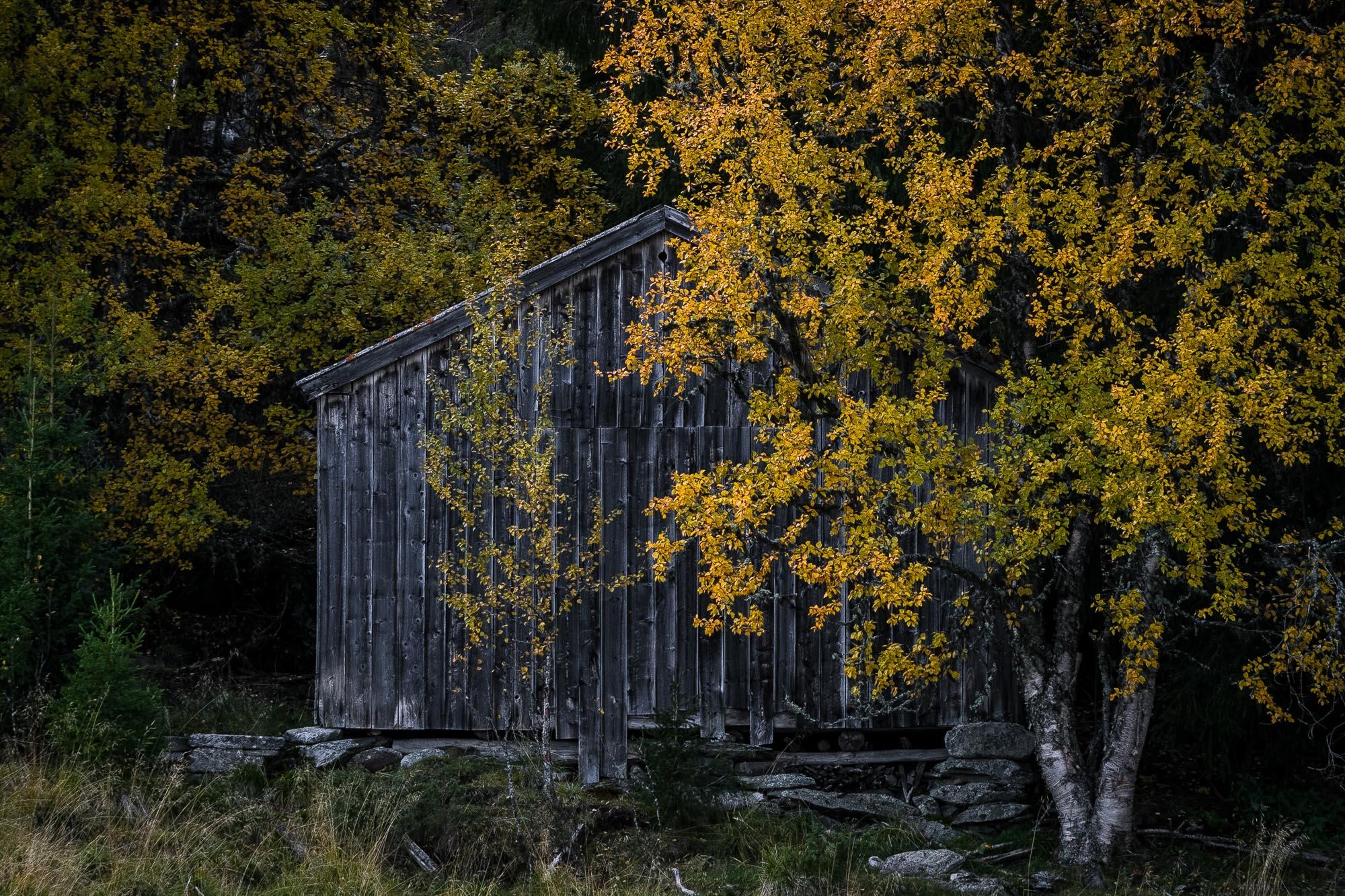 Den gamle låven til bestefar på Skotten, ei koselig setergrend i Ringebu. Opprinnelig var det rundt 40 setrer her, men noen er nå borte. Bildet ble tatt en gul høstdag i september.