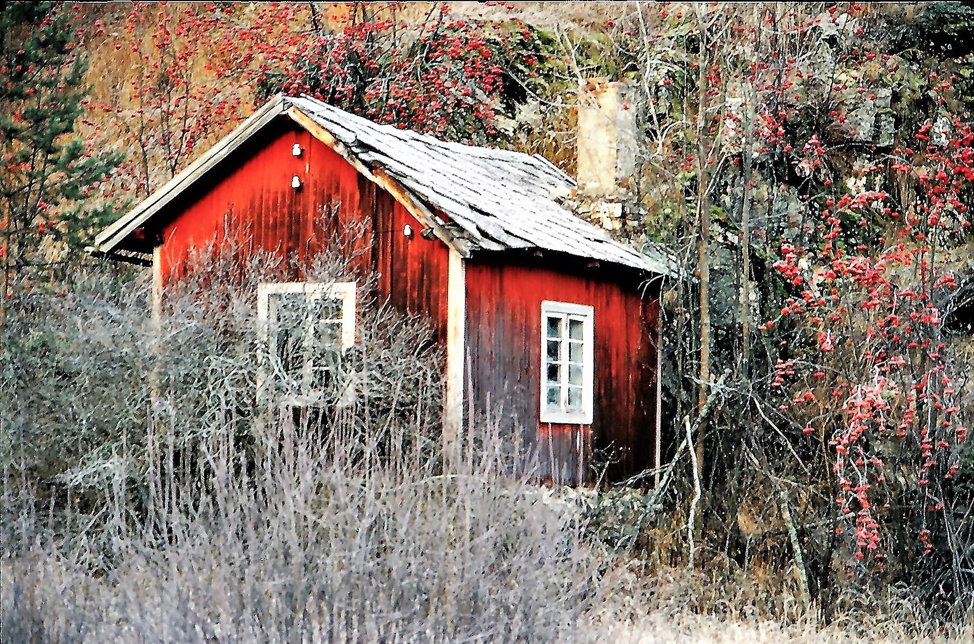 BESK TRØST Du tåler alt av snø og kaldt og is i dine årer så lenge det smaker salt av dine tårer. Hans Børli
