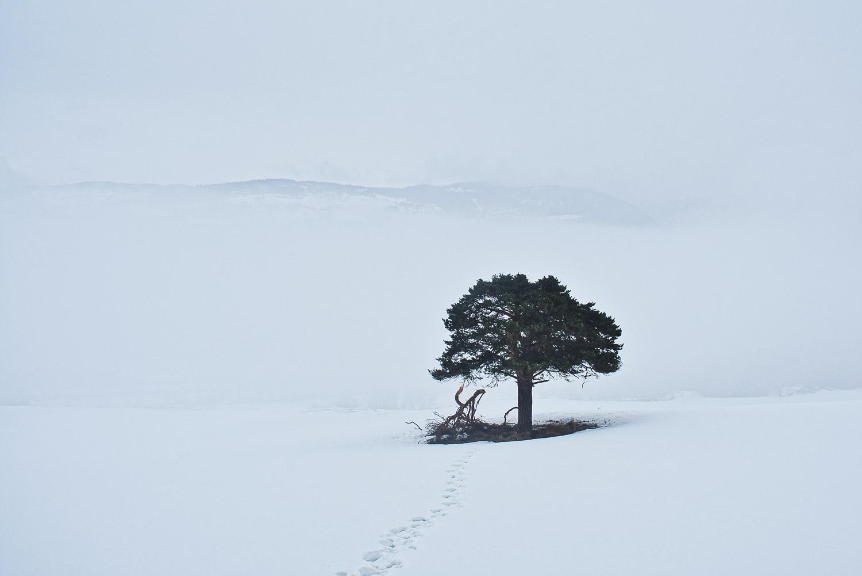 «Scars of a winter» er mitt favorittfoto fra 2018. En minimalistisk komposisjon, bare et tre,  fotspor man kan skimte, og tåke. Det er to ting som gjør at dette er mitt favorittfoto.  Først og fremst tittelen. For meg er det å sette en tittel på et foto veldig viktig. Det gir komposisjonen en mening. Uten tittelen ville dette kun være et enslig tre, men det er det ikke. Tittelen forteller en historie. Deler av treet knakk på grunn av store mengder snø, men treet står fortsatt. Ikke dødt, bare skadet. Det andre som er viktig i komposisjonen er tåken. Det finnes mange elementer bak dette treet. Hus, skog, noen ganger traktorer eller dyr. Jeg greide å ta bildet noen sekunder før tåken fikk kontroll over allting. Hadde jeg ventet ett minutt, kanskje mindre, ville det kun vært tåke.