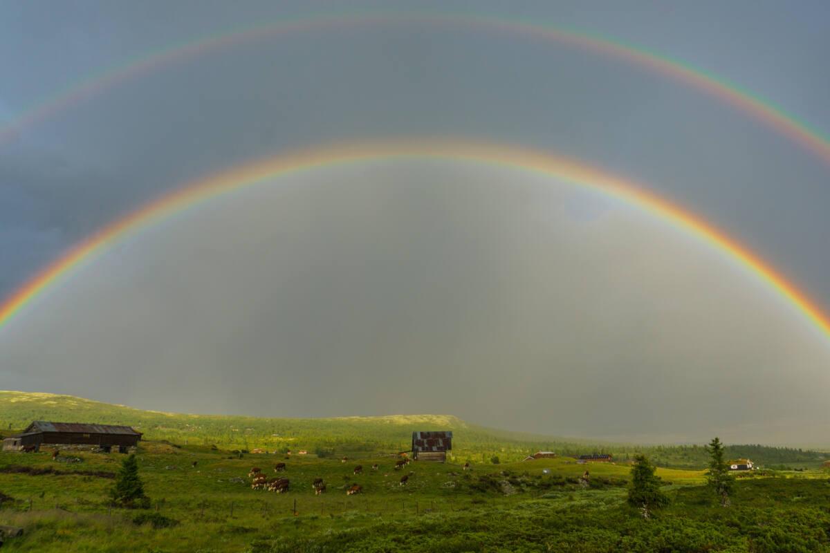 Fjorårets sommer var rekordtørr - her er en av de få regnbuene vi fikk se.  Bildet er tatt på Øksendalen i Ringebu, her var jeg store deler av sommeren i fjor.  Øksendalen er en gammel seterstøl på Ringebufjellet. Det er ingen som driver med seterdrift her i dag, men som du kan se på bildet så er Øksendalen et fint område for beitedyr! :)